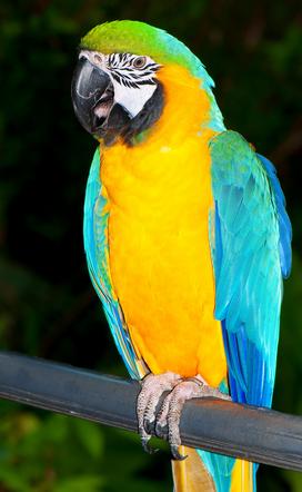 Красивые фото попугаев