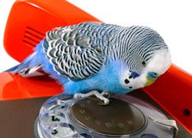 вопросы про попугаев