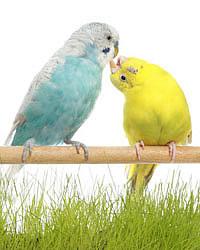 частые вопросы про попугаев