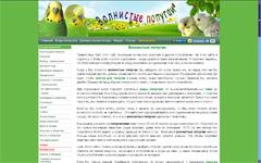 сайт попугайчики